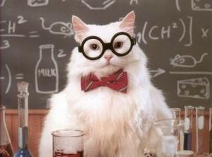 chat-a-lunette extrait
